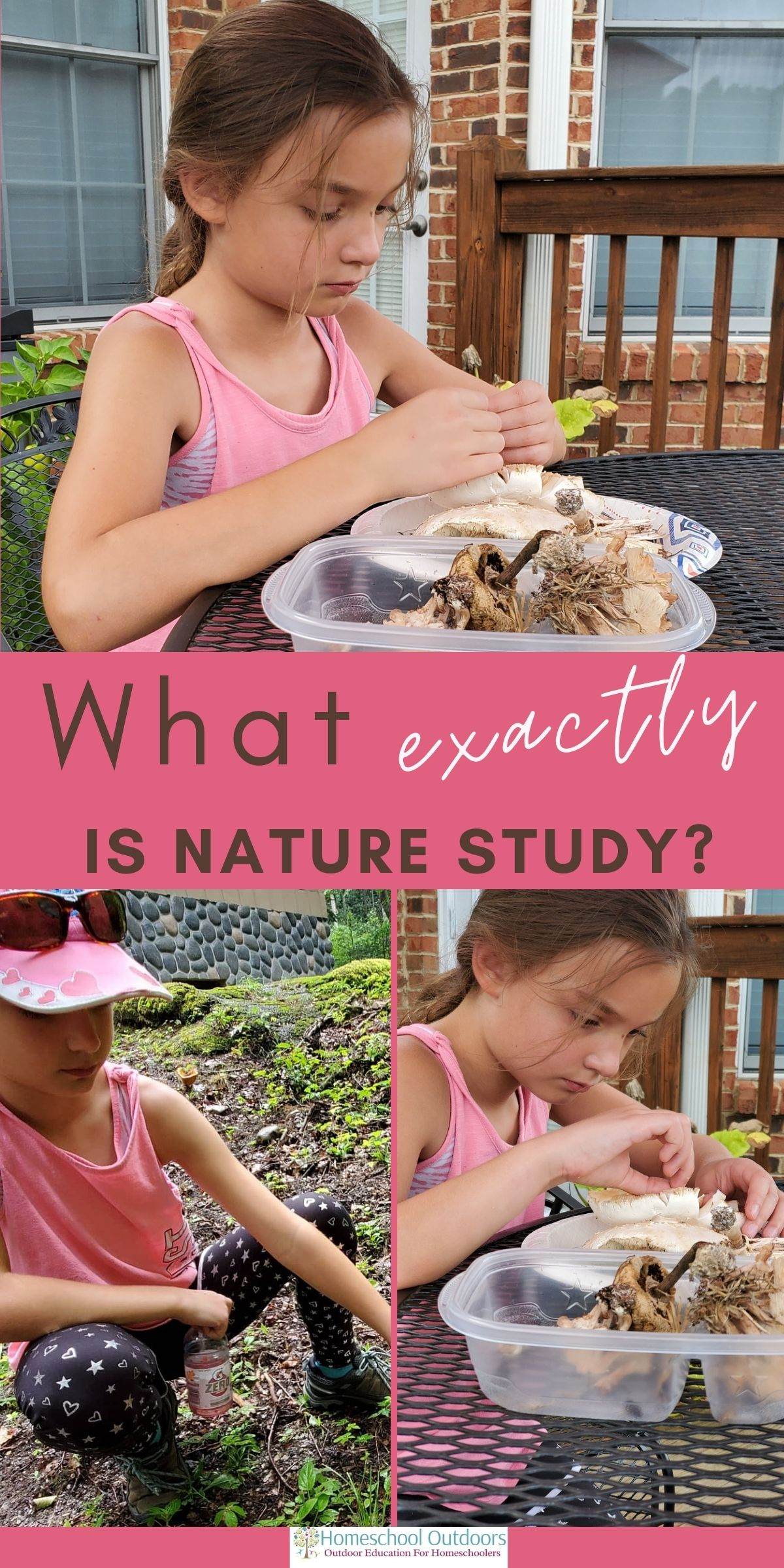 what is nature study
